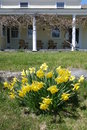 Spring colonial house porch with yellow daffodils sunlit in garden of american Stock Photos