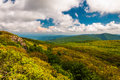 Spring color in the Blue Ridge Mountains, in Shenandoah National Park, Virginia. Royalty Free Stock Photo