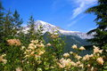 Spring colors in beautiful Mount Rainier backdrop Royalty Free Stock Photos