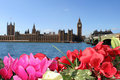 Spring colors of London. Flowers, sky, Parliament