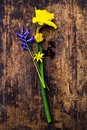 Spring is coming fresh flowers village life Royalty Free Stock Image