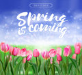 Spring is coming lettering on glade of pink tulips background. Spring bright nature illustration. Vector EPS10.