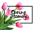 Spring is coming tulips flowers background with lettering. Vector EPS 10.