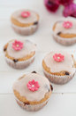 Spring Cupcakes Royalty Free Stock Images
