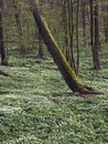 Spring in the deciduous forest Royalty Free Stock Photos