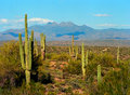Spring in the desert arizona mountain valley Royalty Free Stock Photos