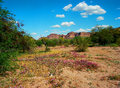 Spring in the desert arizona mountain valley Stock Photo
