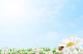 Spring easter border Royalty Free Stock Photo