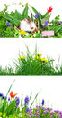 Spring easter flowers and bunny Royalty Free Stock Photography