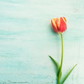 Spring easter tulip floral minimal pastel color background Royalty Free Stock Photo