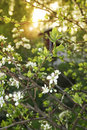 Spring evening in garden Stock Image