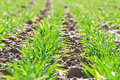 Spring on farmland detail photo of plants a field Stock Photography