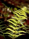 Spring Fern leaf in the forest Stock Photos