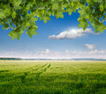 Spring field and blue sky Royalty Free Stock Photography