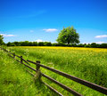 Spring field and blue sky meadow with flowers fenced fence Royalty Free Stock Photo