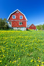 Spring field in front of Swedish house Royalty Free Stock Photo