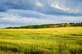 Spring Field, Landscape Of Yel...