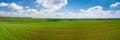 Spring field panorama