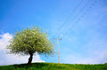 Spring field with solitary tree and blue sky Royalty Free Stock Image
