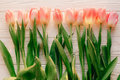 Spring flat lay. pink tulips on white rustic wooden background f Royalty Free Stock Photo