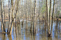 Spring flooding in the forest trees standing water due to Stock Images