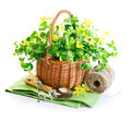 Spring flower basket garden tool white background Stock Photos