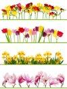 Jaro květina hranice