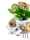 Spring flower in bucket with garden tool and gloves Royalty Free Stock Images