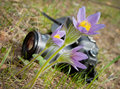 Spring flower and camera Royalty Free Stock Images