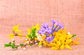 Spring flower composition on sackcloth a background Stock Photography