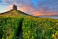 Spring flower field with trail to castle tower Royalty Free Stock Photo
