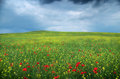 Spring flower meadow. Royalty Free Stock Photo