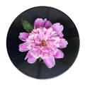 Spring flower pink peony with water drops on it on black vinyl record the white background Royalty Free Stock Image