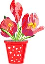 Spring flower red in a flowerpot Royalty Free Stock Photography