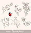 Spring flower set vintage floral collection cherry snowdrop tulip forget me not narcissus ladybug Stock Images