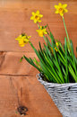 Spring flower wood background old and easter Royalty Free Stock Photography