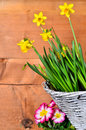 Spring flower wood background old and easter Stock Image