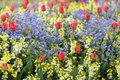 Spring flowerbed of tulips forget me not and snapdragon Stock Images