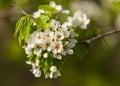 The Spring Flowering