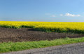 Spring flowering of rapeseed