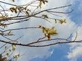 Spring Flowering Of Trees