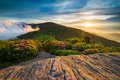 Spring Flowers Appalachian Trail Sunset Blue Ridge Mountains NC Royalty Free Stock Photo