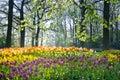 Spring Flowers In April Light