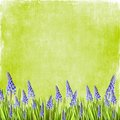 Spring flowers background frame or scrapbook with copy space Royalty Free Stock Photography