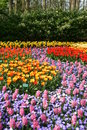 Spring flowers beatiful in the keukenhof gardens in lisse Royalty Free Stock Photography