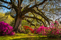 Spring Flowers Bloom at Charleston South Carolina Plantation Royalty Free Stock Photo