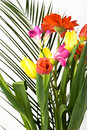 Spring flowers bouquet Stock Image