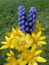 Spring flowers bouquet yellow and blue Royalty Free Stock Images