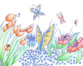 Spring flowers and butterflies hand drawn background pencil and Royalty Free Stock Photo