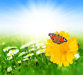 Spring flowers with butterfly on meadow Stock Image